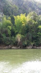 ForestFlora-28