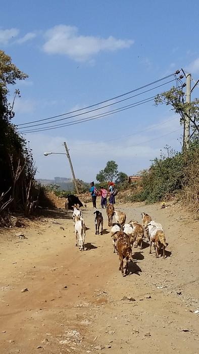 EthiopiaDay2-29