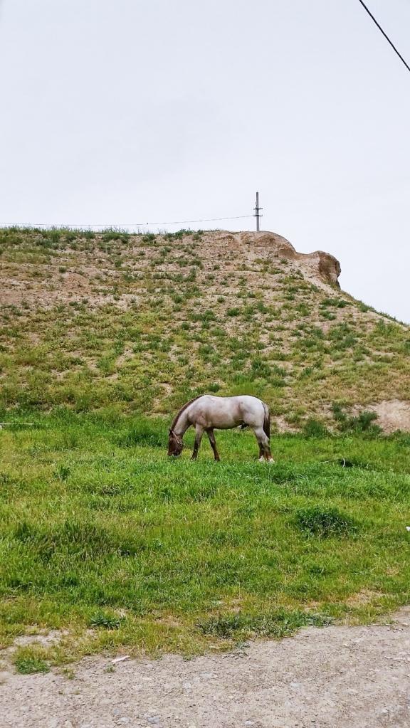 Tajik055541