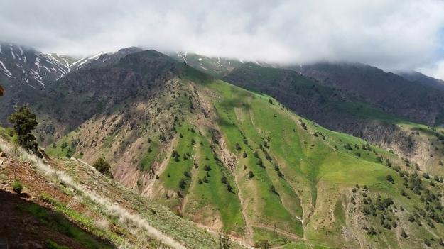 Tashkent013713