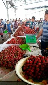 Tashkent015903