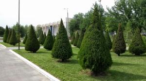 Tashkent055234